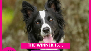 We Have Our Winner. Congratulations Lexi - Pet of the Year for 2020!
