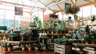 It turns this Kiwi plant store is giving away hundreds of plants absolutely free