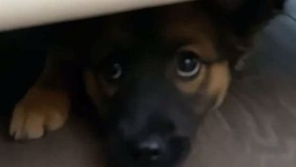 Adorable dog plays hilarious game of hide-and-seek with her owner