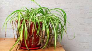 This plant hack will apparently bring your dying plants back to life!